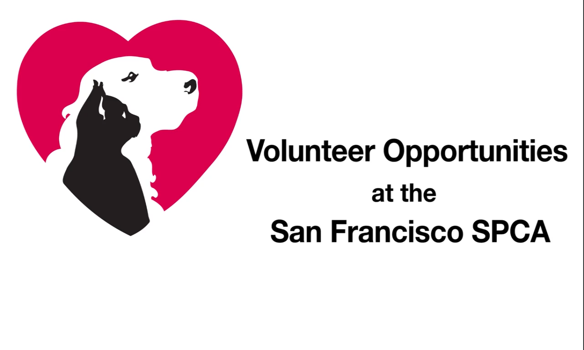VOLUNTEER OPPORTUNITIES AT THE SF SPCA